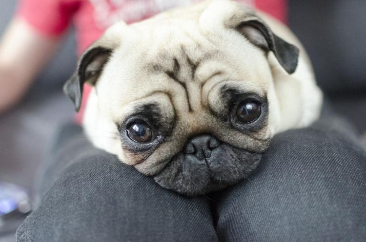 【獣医師監修】愛犬が飼い主に甘えたいときにする、3つのサイン(しぐさ)と理由や意味は?