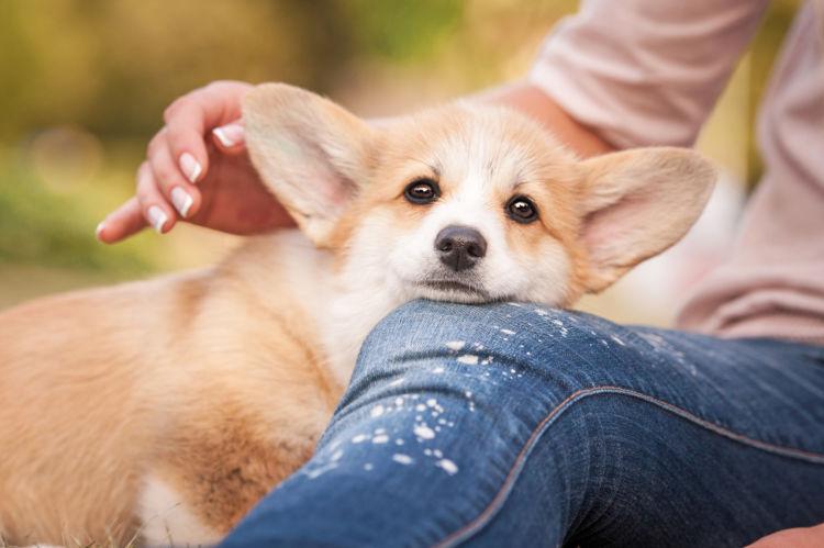 犬の甘えるサイン(しぐさ)③~「身体の一部をつける」