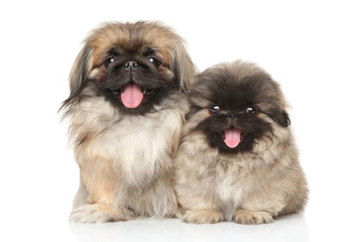 犬の口蓋裂【予防対策】