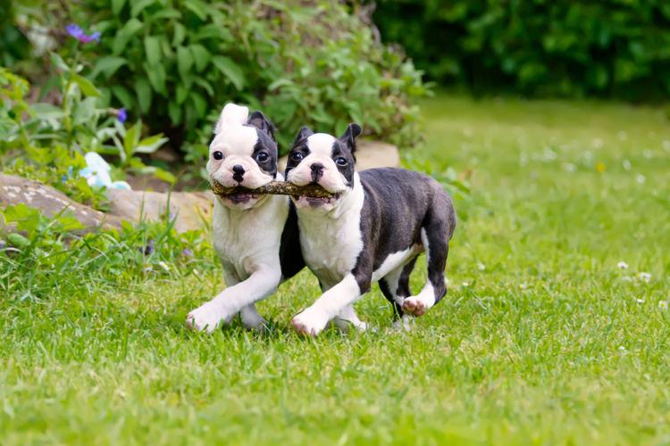 犬の口蓋裂と間違えやすい病気