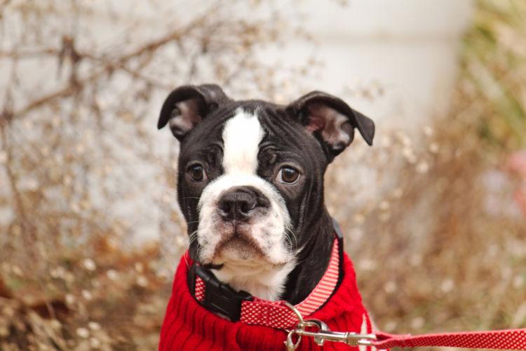 犬の口唇裂と間違えやすい病気