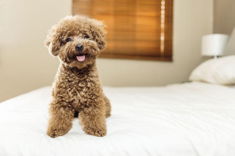 犬の外歯瘻(がいしろう)【なりやすい犬種】