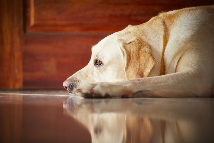 犬の尿路感染症【原因】