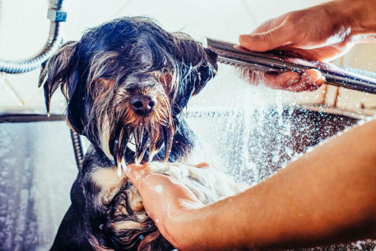 犬の尿路感染症【予防対策】