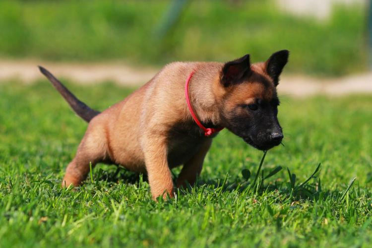 犬の尿路感染症と間違えやすい病気