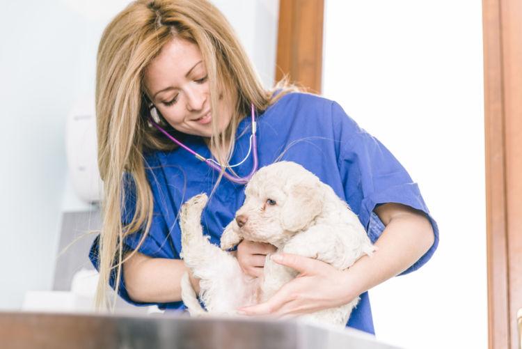 犬のレプトスピラ症【診断方法】