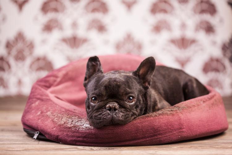 犬のレプトスピラ症と間違えやすい病気