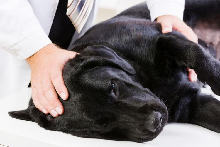 犬の胃拡張・胃捻転症候群【治療方法】