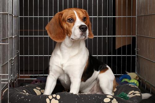 犬が落ち着ける環境を作るには?ケージやサークルの正しい使い方