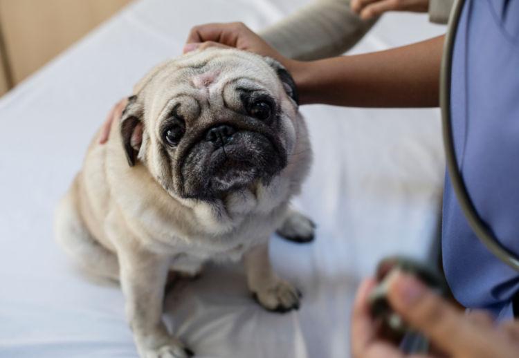 犬の胃炎【治療方法】