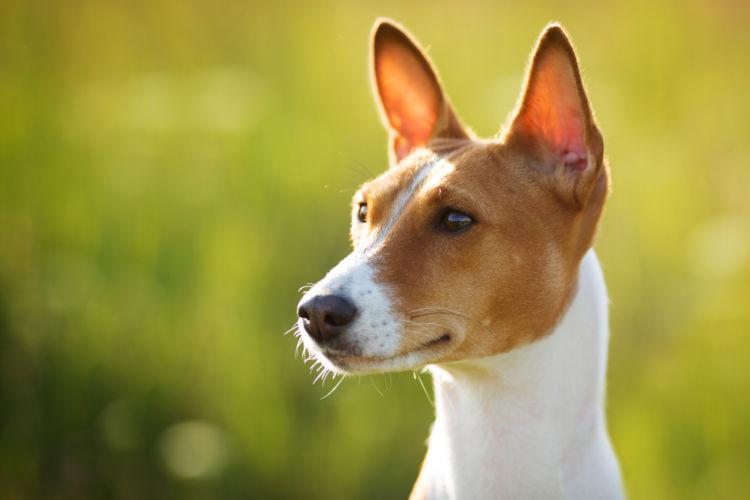 犬の中耳炎【原因】