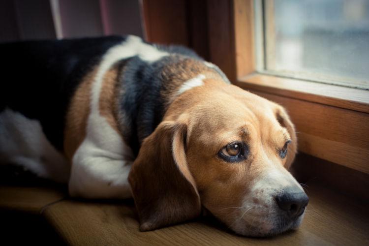 犬の内耳炎【原因】