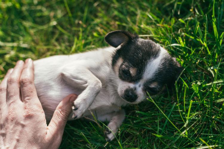 犬の胃炎【原因】