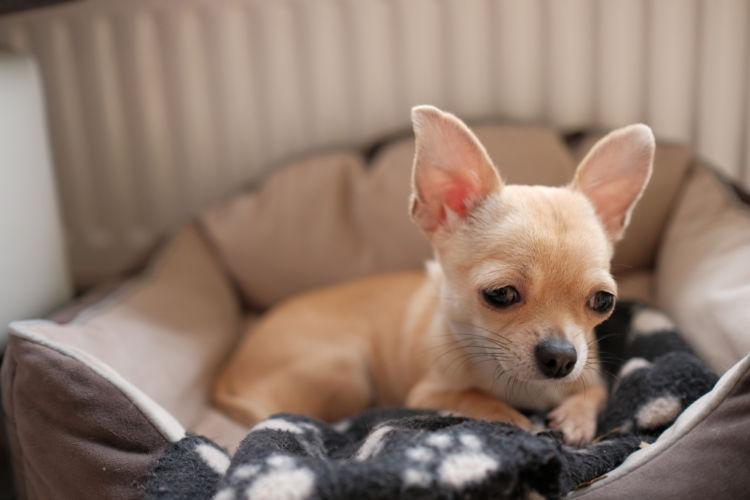犬の末梢性前庭障害
