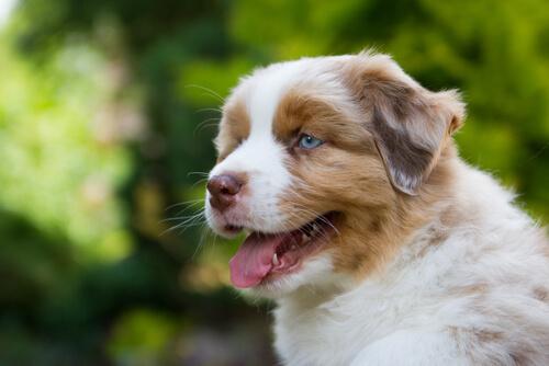 ベッドから飛び降りている犬は要注意!飼い主が知っておきたい犬の捻挫と骨折