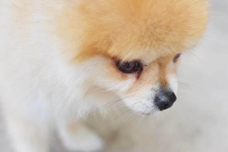 犬がボーっとしている【考えられる原因】