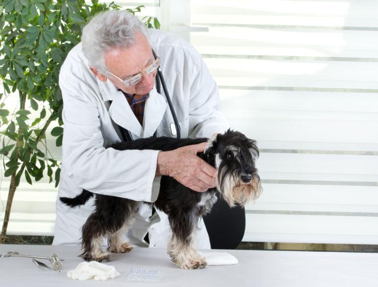 犬の異常サイン