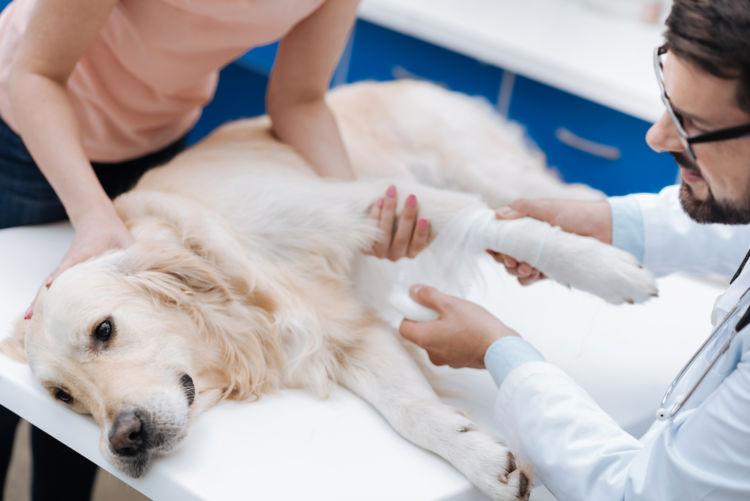 犬の膣から出血している【この症状で考えられるおもな病気】