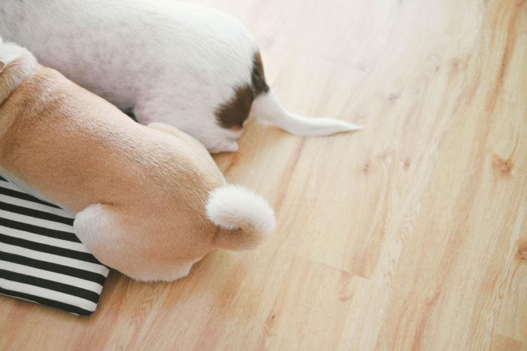 犬がおしりを気にする・痒がる【考えられる原因】