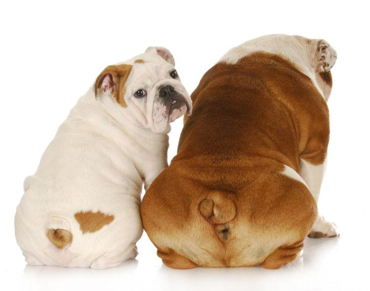 犬がおしりを気にする・痒がる【こんな症状は要注意!】