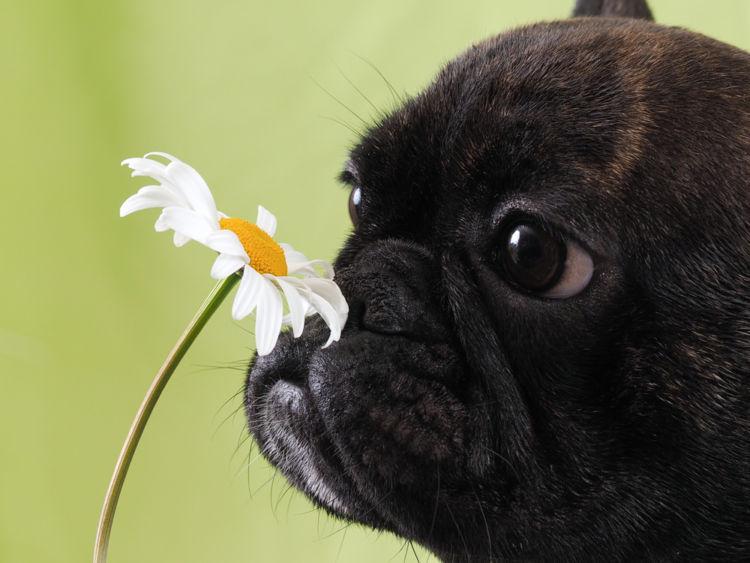 犬がおしりを気にする・痒がる【この症状で考えられるおもな病気】