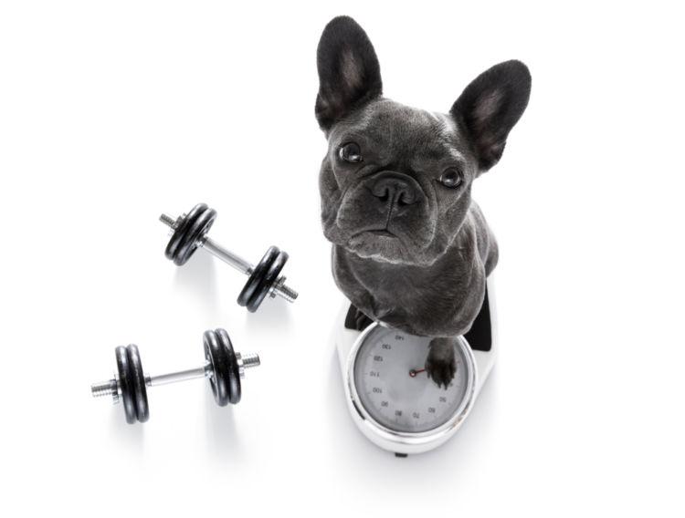 運動量が増えた、筋肉が増えた