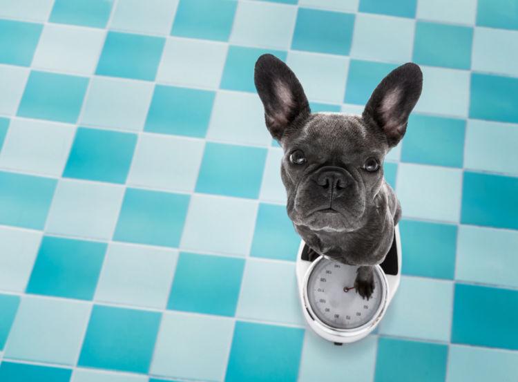 犬の体重が減少している【こんな症状は要注意!】