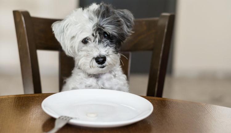 犬の体重が減少している【この症状で考えられるおもな病気】