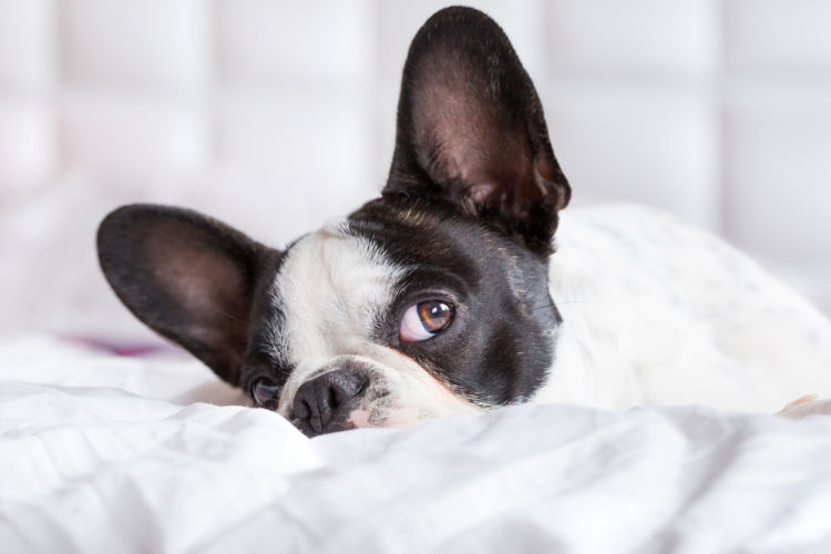 犬の耳垢が黒い【こんな場合は要注意!】