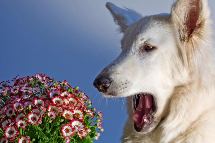 犬が後ろ足でお腹を掻いている【こんな場合は要注意!】