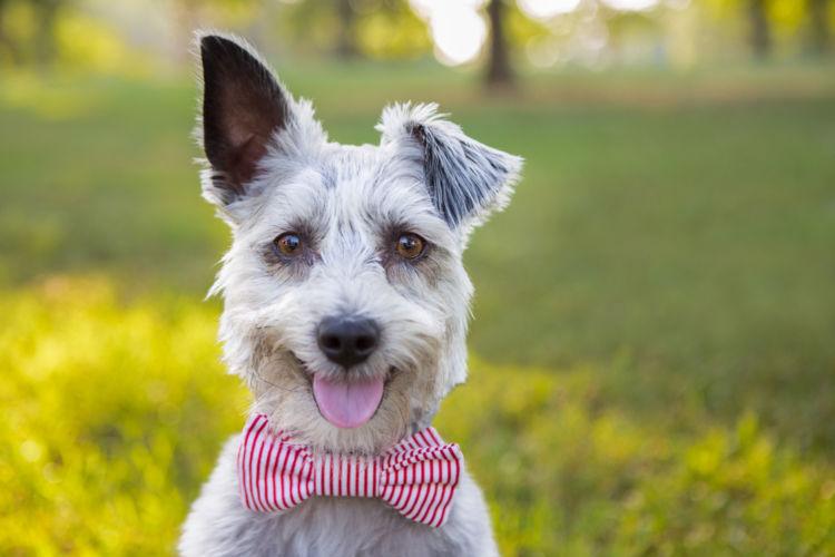 犬の耳が下がっている【こんな症状は要注意!】
