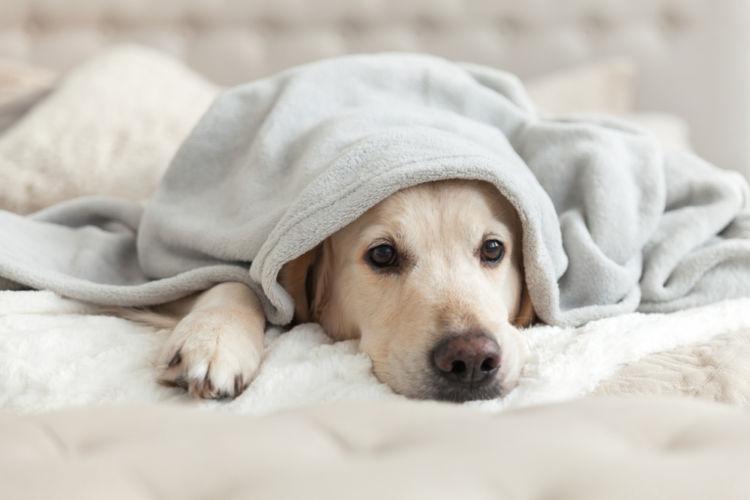 犬のお腹が黒ずんでいる【この症状で考えられるおもな病気】