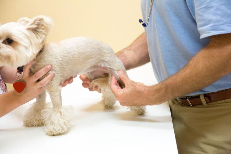 犬の膝蓋骨脱臼【診断方法】
