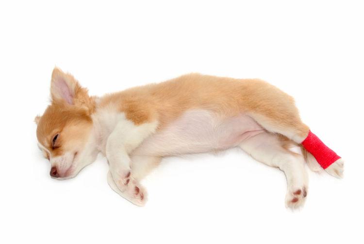 犬の脱臼【治療方法】