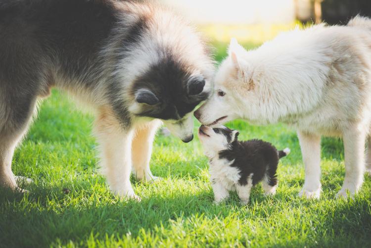 生後3か月まで親犬と暮らす子犬