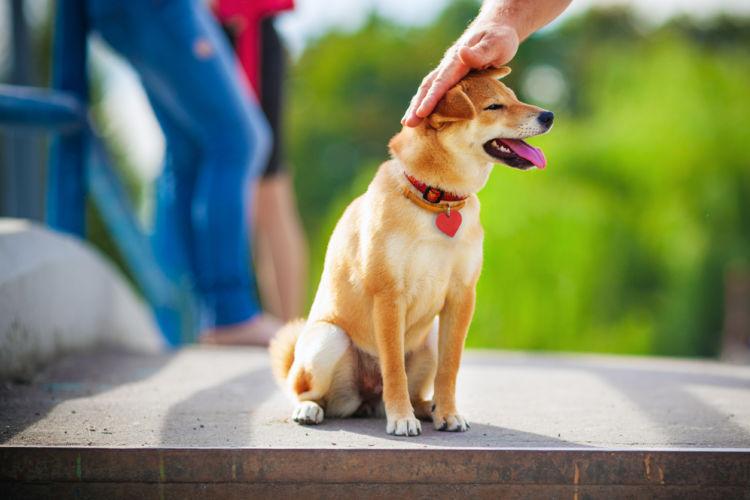 犬の肥満細胞腫【予防対策】