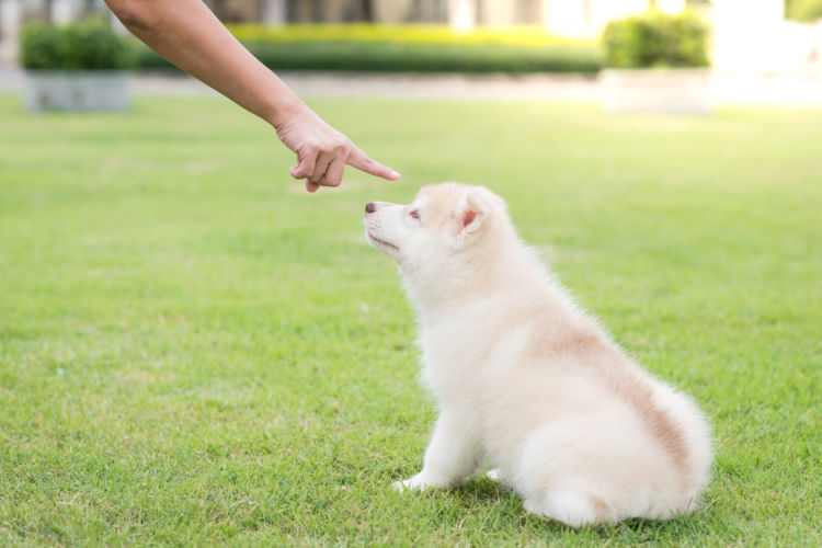 「犬の噛み癖を直すしつけ方法」その②~【叱り方】を見直す