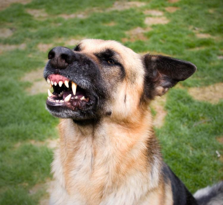 噛む犬を訓練する
