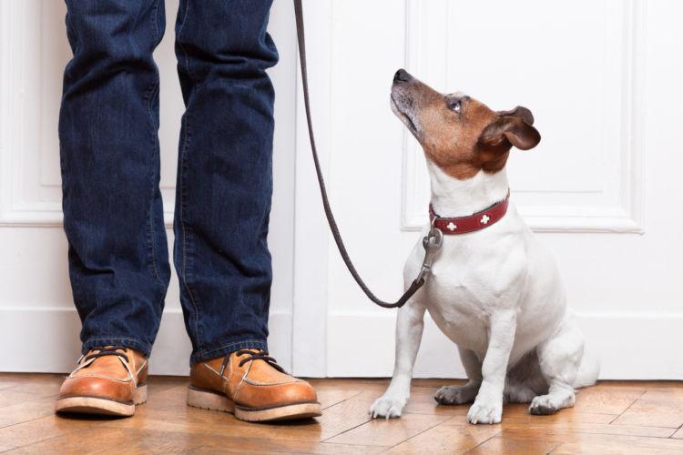 「犬が散歩を嫌がる原因・理由・対処法」その①~【外出】が怖い!