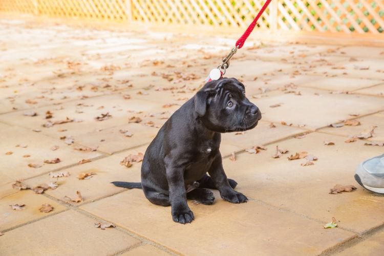 「犬が散歩を嫌がる原因・理由・対処法」その③~【楽しい散歩方法】を知らない!