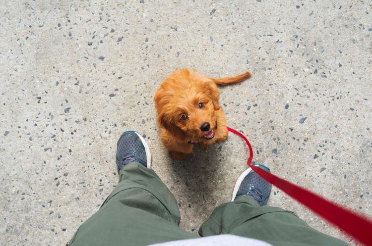 「犬が散歩を嫌がる原因・理由・対処法」まとめ