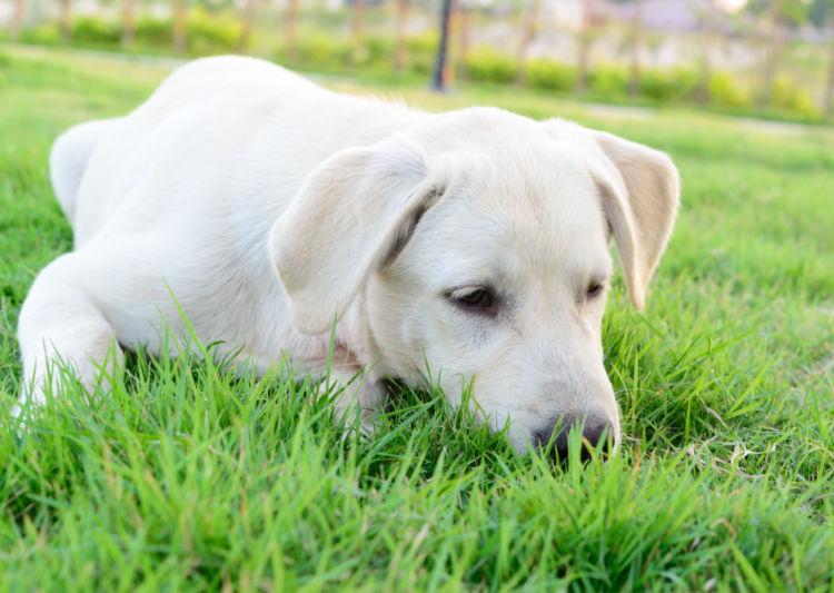 「犬が草を食べる理由・注意点」その③~【どんな草を好む?】