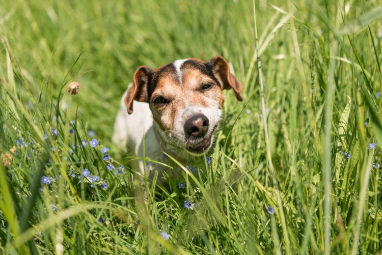 「犬が草を食べる理由・注意点」その①~【正常な行動】