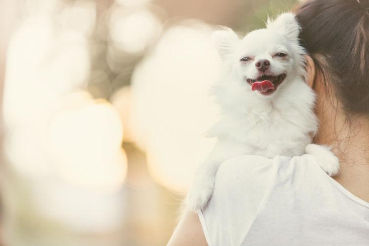 愛犬に関わる情報に注意する