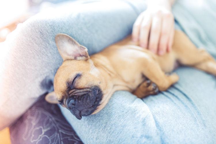 【獣医師監修】犬が喜ぶ撫でられたい5つの部位と、撫でられることを嫌がる2つの部位は!?