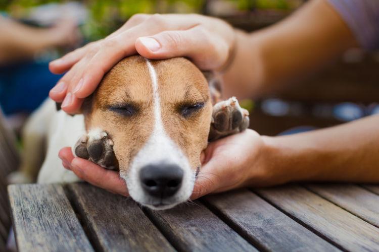 「犬を撫でる」【3つのメリット!】