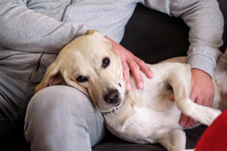 撫でるメリット③「愛犬との信頼関係が深まる」濃いコミュニケーション