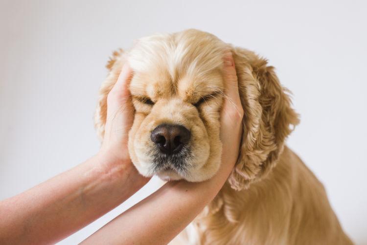 犬が気持ち良いと感じる場所③「耳の付け根」「後ろの辺り」