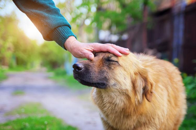 犬が気持ち良いと感じる場所④「眉間(みけん)」