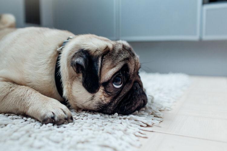 「犬を撫でる」【撫でられたくない】2つの部位